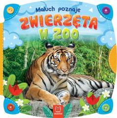 Maluch poznaje zwierzęta w zoo
